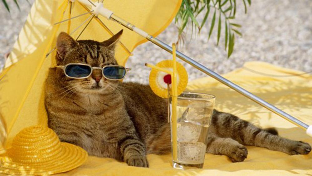 Enjoy the Sun, Enjoy It Safely